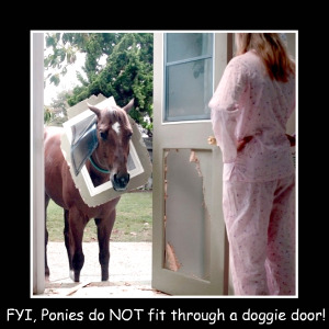 ponies do not fit