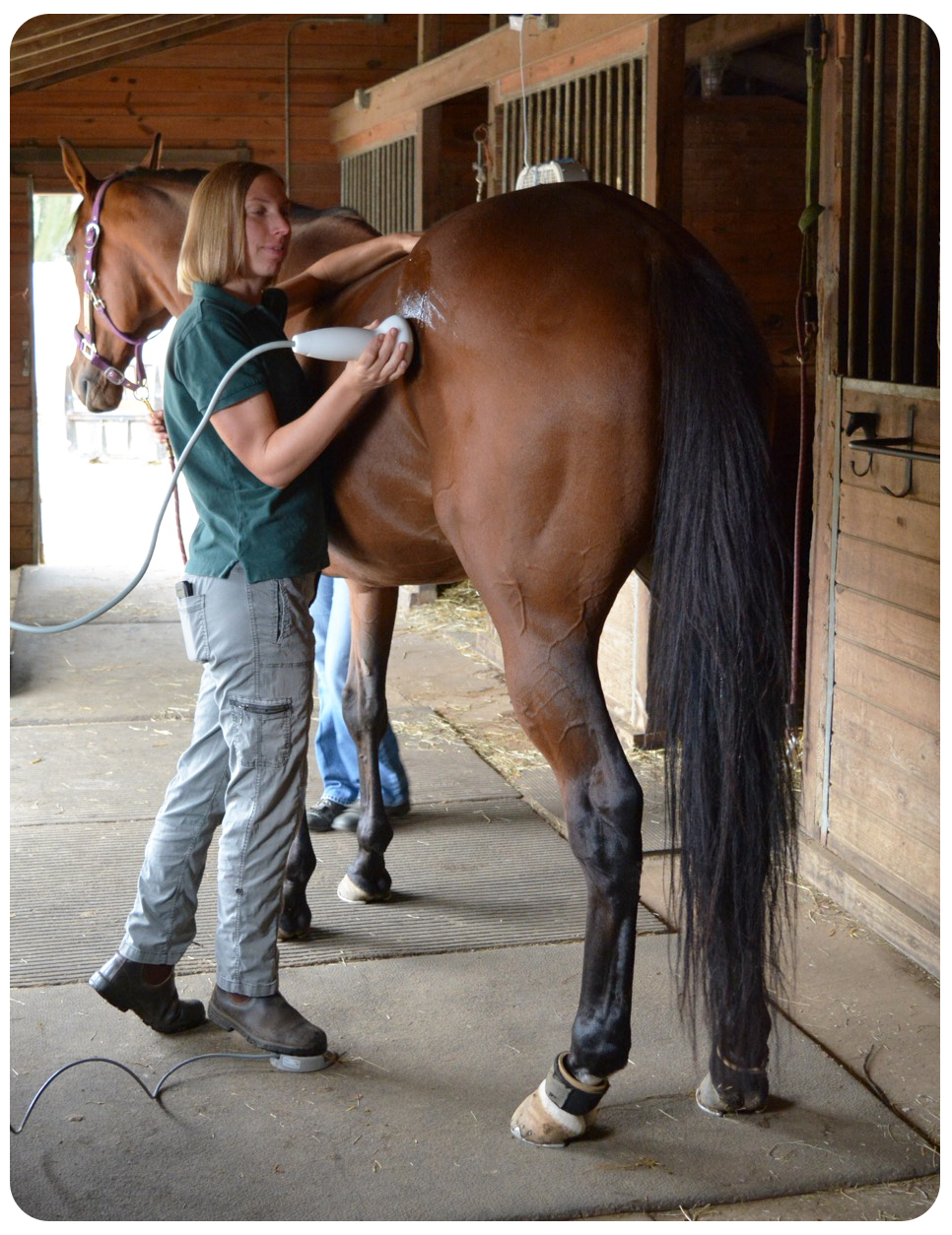Foundation Equine Wellness and Performance - Veterinarian in
