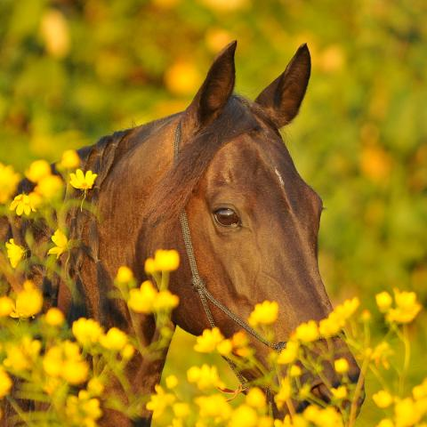 horse in the flower garden